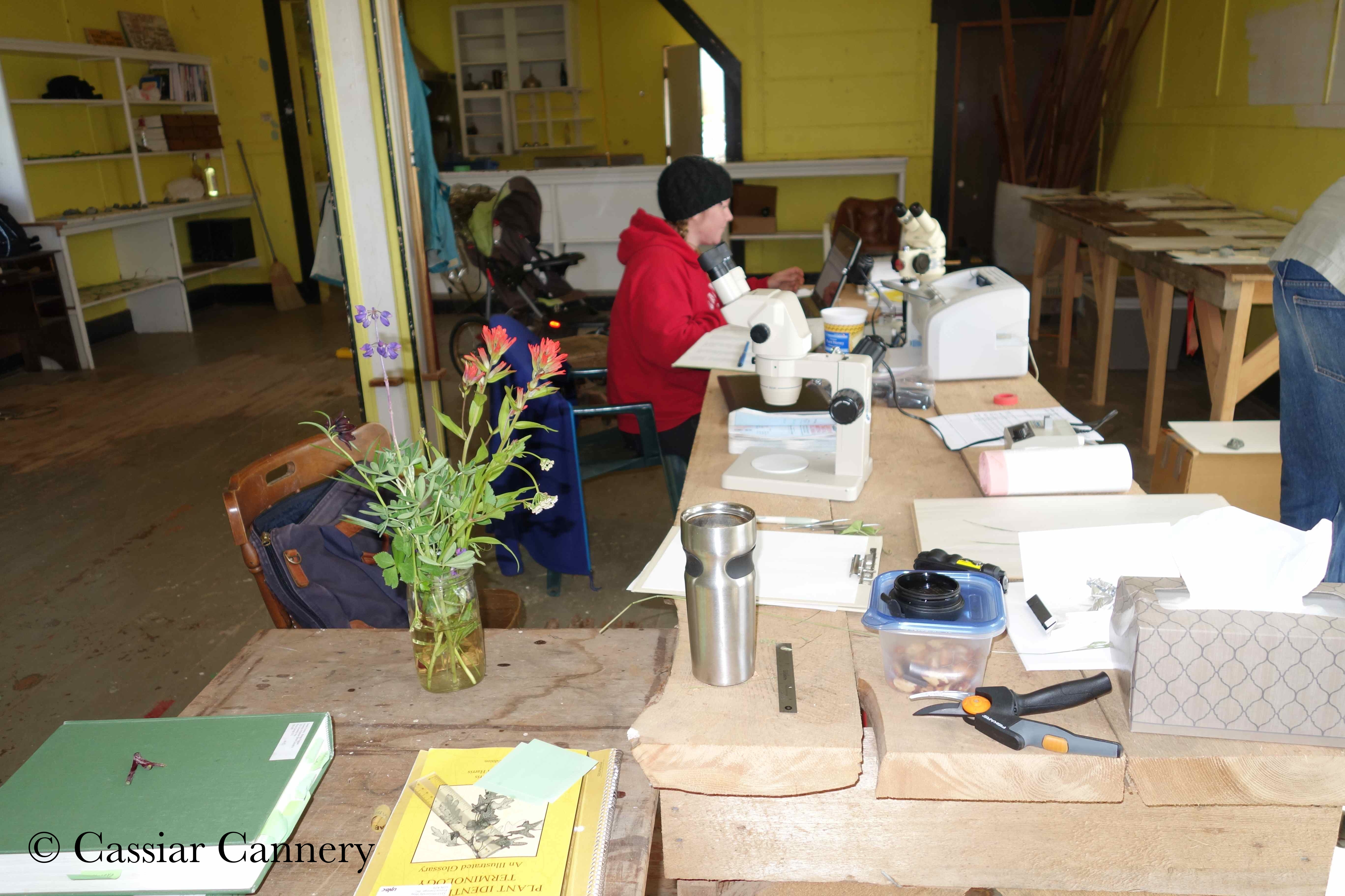Cassiar Cannery - 2014 Botany Research
