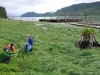 Cassiar Cannery - 2014 UNBC Botany Research