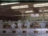 Cassiar Cannery - Doug Lait - 1975 - Canning Line 3