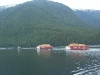 Cassiar Cannery - iconic West Coast marine activity - Seaspan with a double chip barge tow