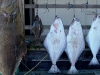 Cassiar Cannery - holy halibut - an afternoon fishing