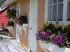 Cassiar Cannery - return of window boxes at Coho House