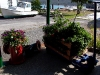 Cassiar Cannery - flowers