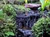 forest rivulet.jpg
