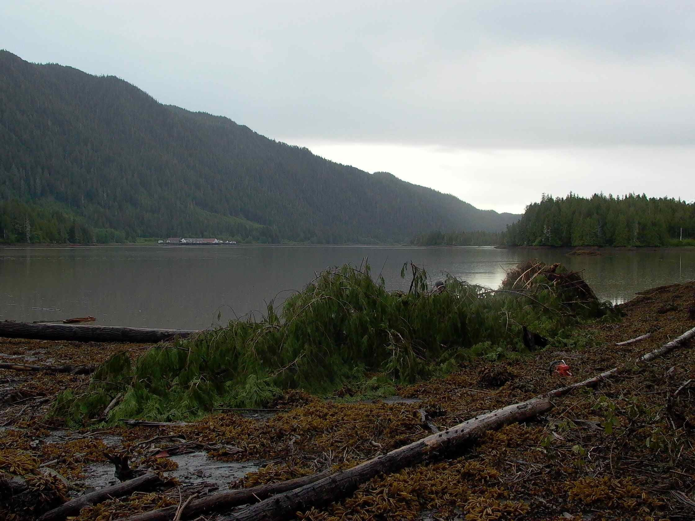 Cassiar Cannery: our lumber comes from trees that have fallen from natural causes