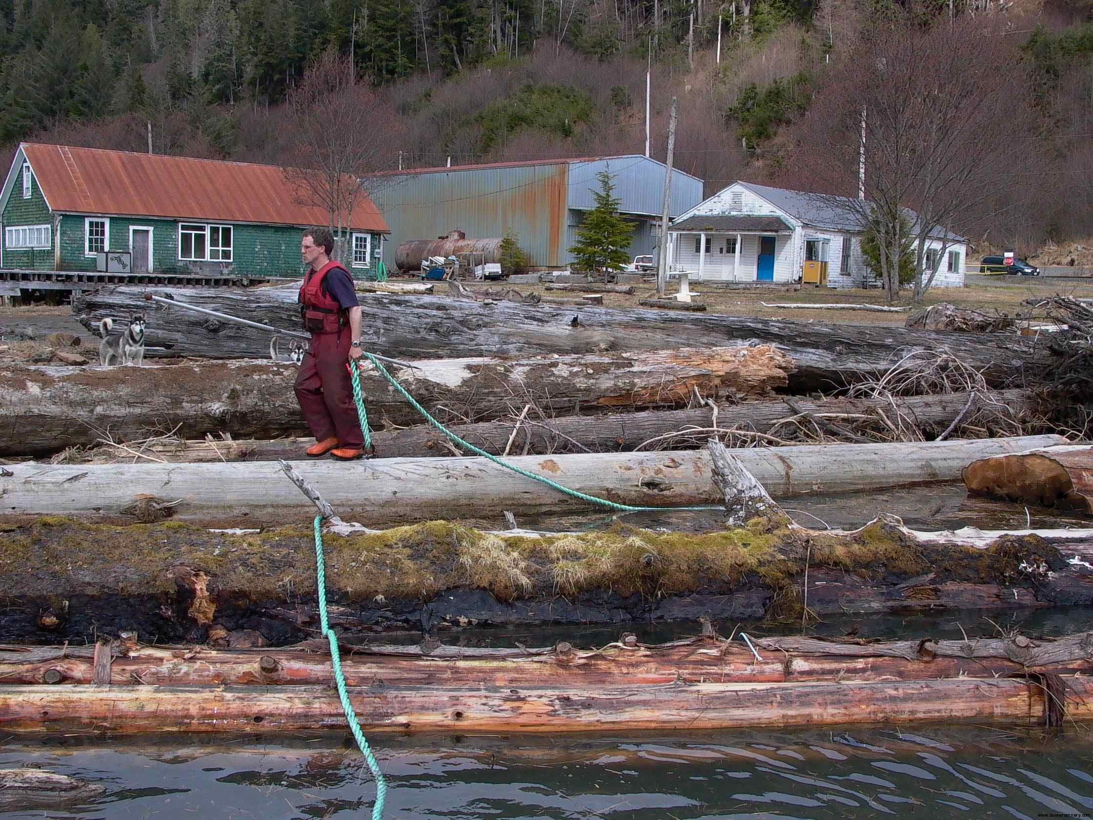 Cassiar Cannery: our friend booms them up for towing to the local sawyer in Port Edward
