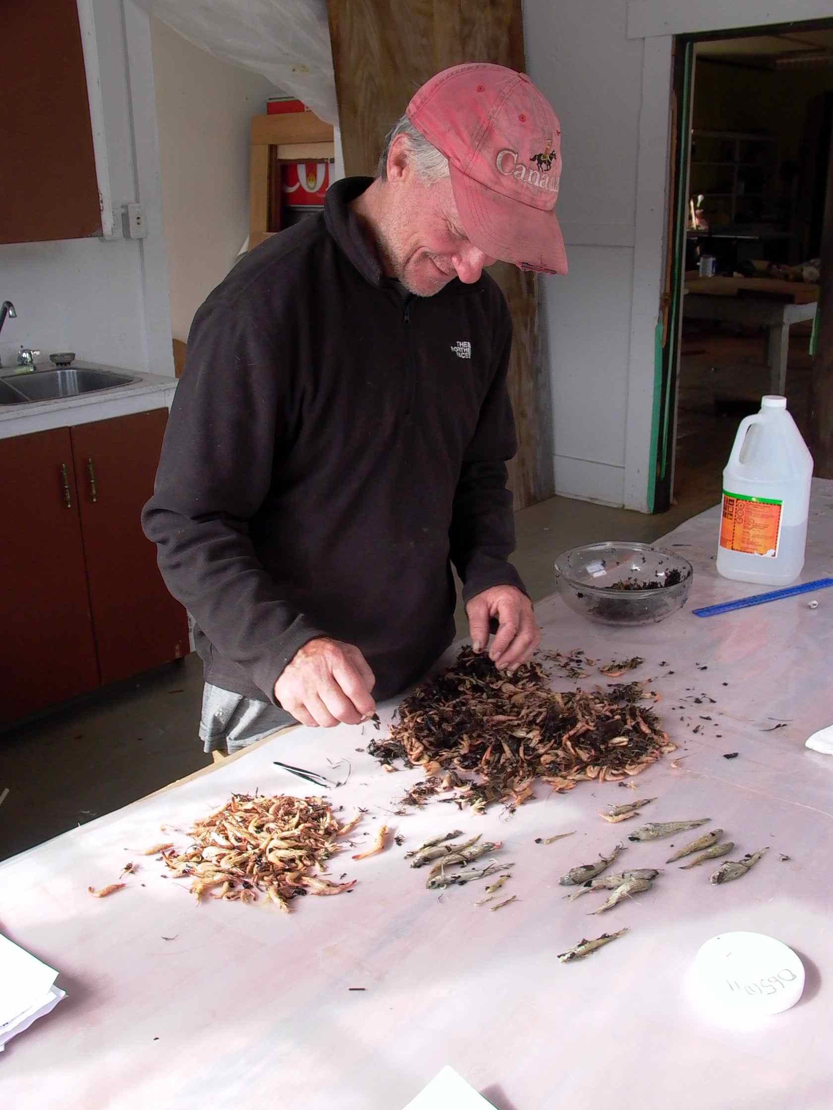 Cassiar Cannery - SERC - MB - JK - 2011/2012 - JK, biologist