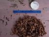 Cassiar Cannery - SERC - MB - JK - 2011/2012 - lots of shrimp in sample 065 (1) 11