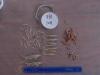 Cassiar Cannery - SERC - Marine Biology - JK - 2011/2012 - sample 7 (1) 2011 - good diversity