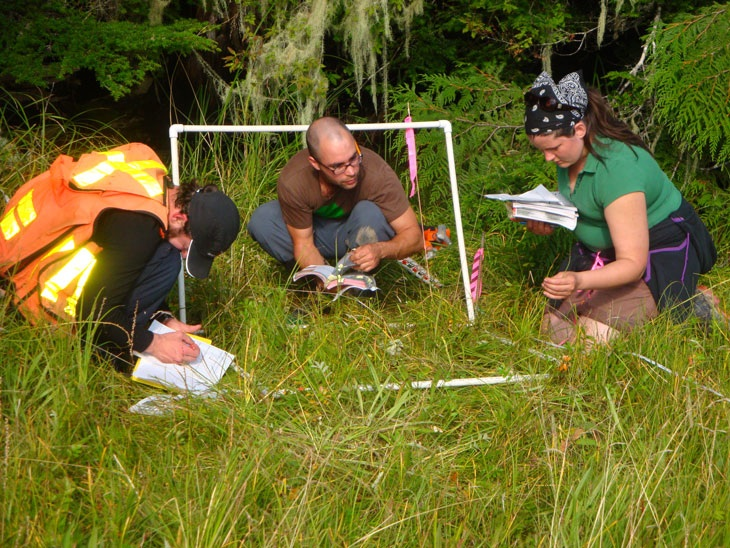 Cassiar Cannery - studying and identifying species within the one metre area