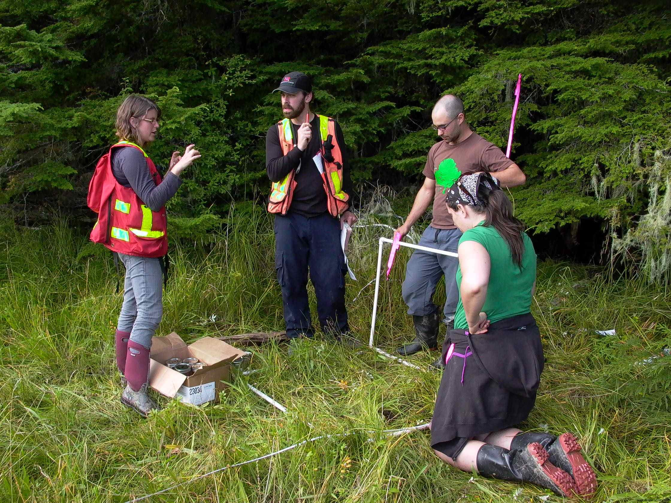 Cassiar Cannery - preparing to catalogue species in a one meter square