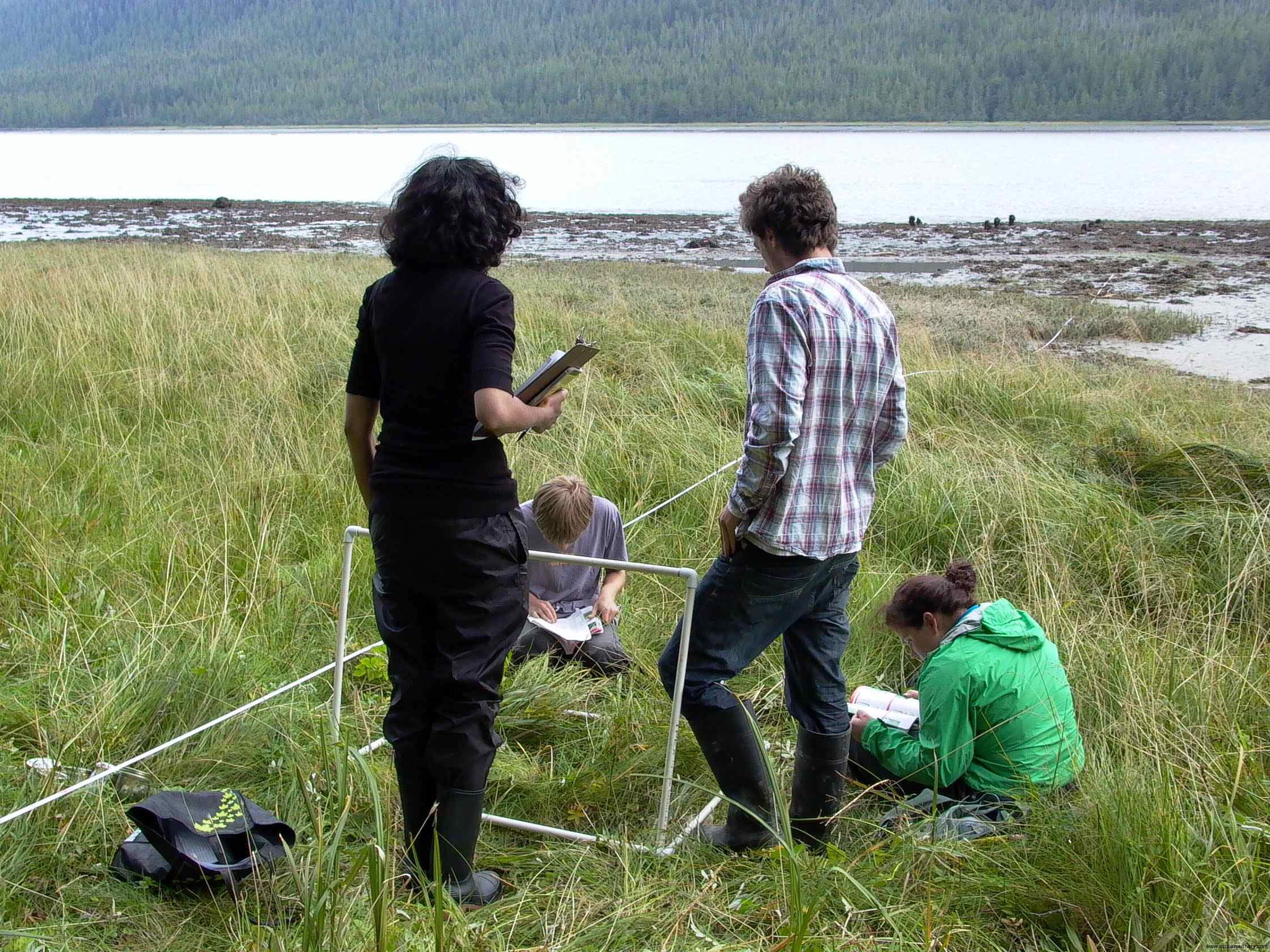 Cassiar Cannery - identifying the diverse species as the students work their way towards the ocean