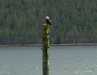Cassiar Cannery - Willis or Babette perching on a pile