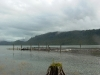 Cassiar Cannery - wildlife - hundreds of sandpipers on our logs