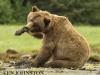 grizz scratching copy.jpg
